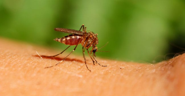 What is the best repellent against Zika