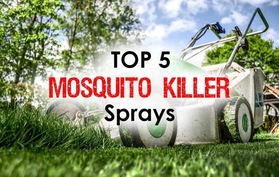 Mosquito Killer Sprays: Discover the Top 5 Life Savers for Immediate