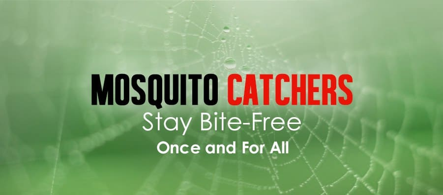 Mosquito Catchers: Stay Bite-Free Once and for All | Mosquitofixes