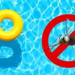 How to get rid of Mosquito Larvae in Pools: Expert Guide