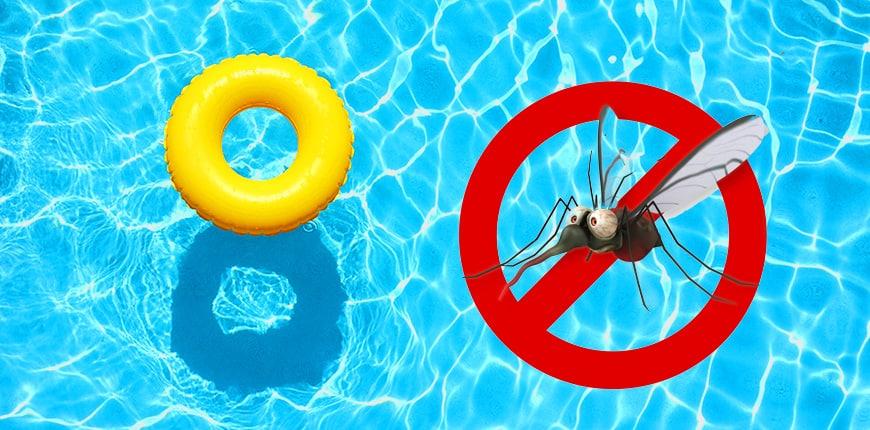 mosquito larvae in pool